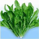 保健蔬菜种子 看看这些特菜荠菜你还