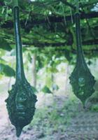 长廊观赏葫芦种子 葫芦种子 雪莲果种子