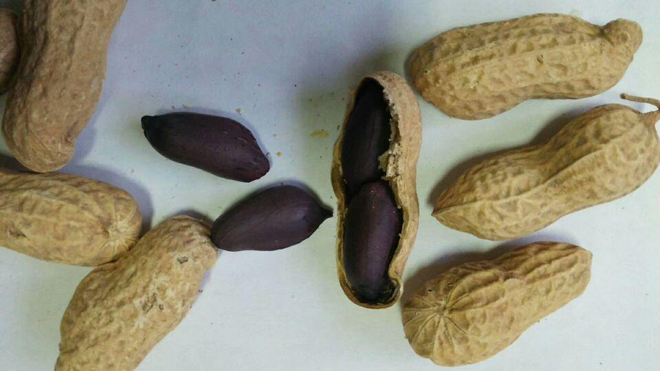 黑花生种子批发 黑花生种子厂家 黑花生豆子