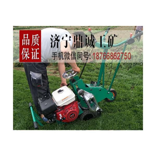 甘肃酒泉汽油机动草场草坪移植机 手推式本田自走式起草皮机