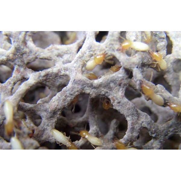 海口白蚁防治海口虫控