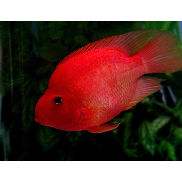 济南高新区齐鲁软件园鱼病免费诊断