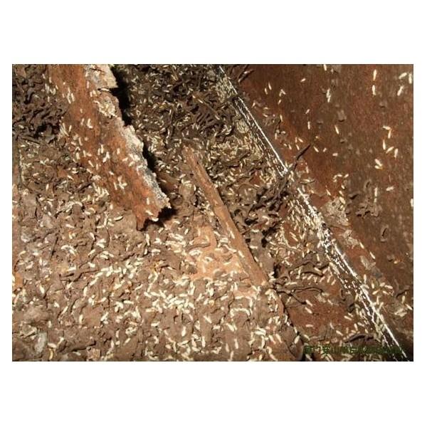 海口白蚁防治