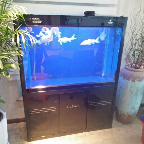 鱼缸水质检测