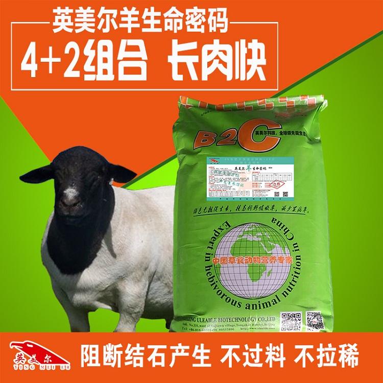 肉羊快速育肥羊怎么喂