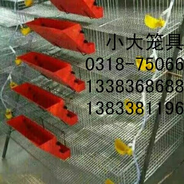卖鸡笼 鸽子笼 兔子笼 鹌鹑笼 运输笼 鹧鸪笼 貉笼 宠物笼