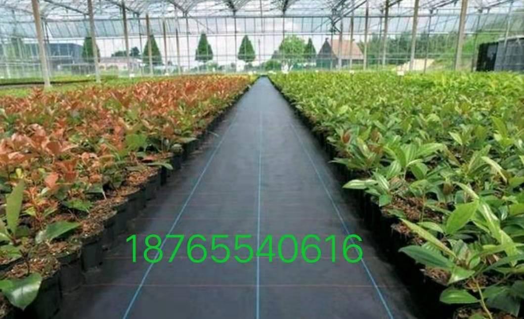 防草布园艺地布果树果园专用抗氧化