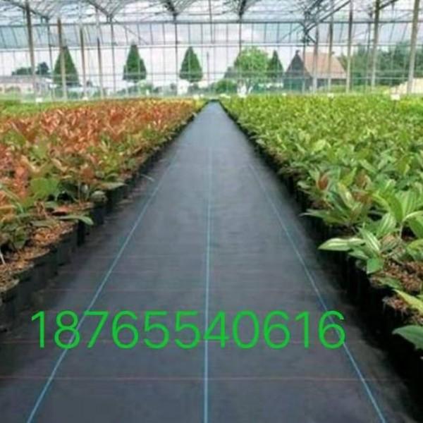 防草布园艺地布果树果园专用抗氧化透气保湿提高产量