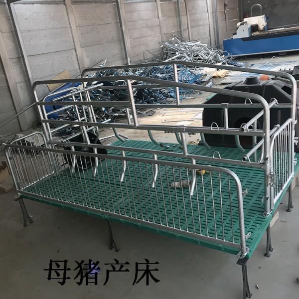 供应单体双体母猪产床设备制造商厂家诚信经营