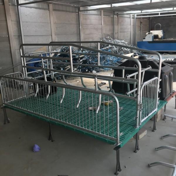 生产厂家供应单体双体母猪产床设备制造商诚信经营