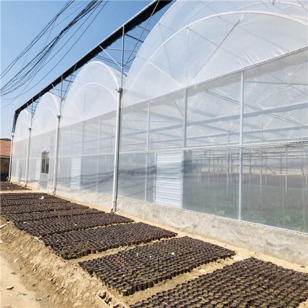 水果薄膜温室大棚 连栋薄膜温室大棚造价