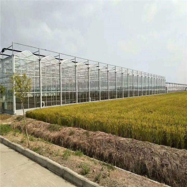 智能温室建设 系统造价 温室供应