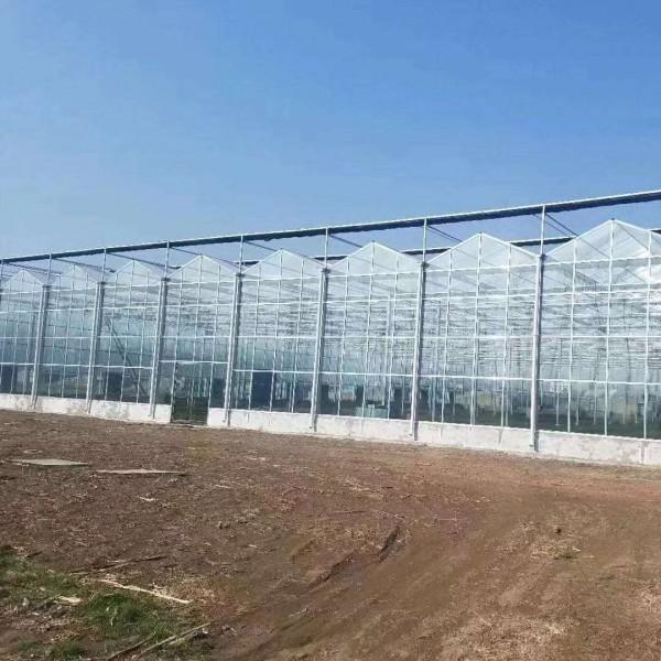 阳光板温室大棚建设工程 阳光板温室大棚温室工程