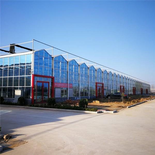 玻璃温室大棚造价施工 连栋玻璃温室大棚建设及设计
