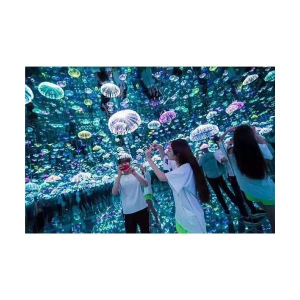 梦幻旅程系列水母世界
