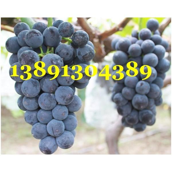 陕西大棚早夏葡萄价格,大棚青提葡萄产地上市价格