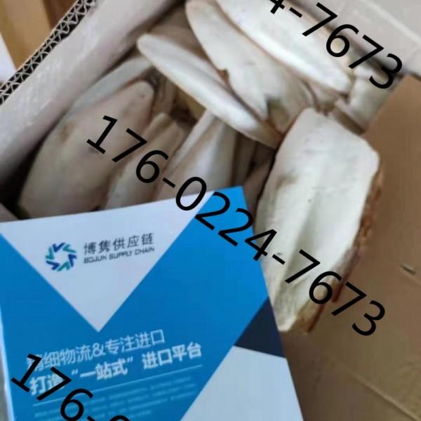 天津海螵蛸清关公司