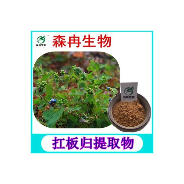 森冉生物 扛板归提取物 贯叶蓼提取物 植物提取原料粉